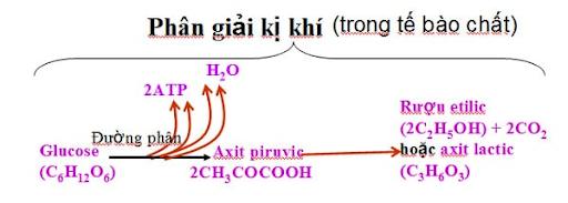 hô hấp hiếu khí có ưu thế gì so với hô hấp kị khí